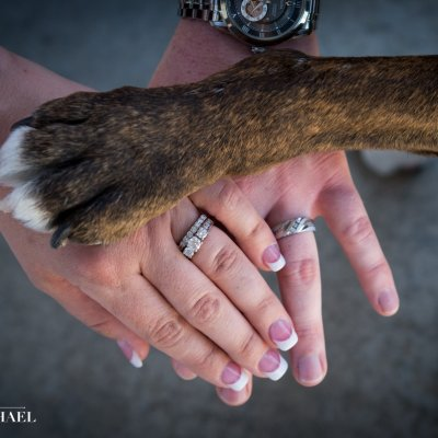 Wedding Photo of Dog Paw and Hands