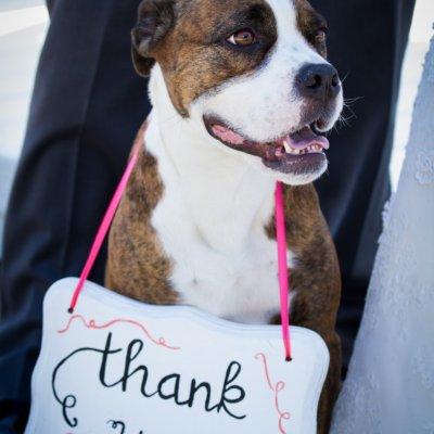 Dog Ring Bearer Wedding Photos