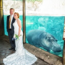 Fiona Cincinnati Zoo Wedding
