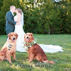 Dog Ring Bearer Wedding Photo