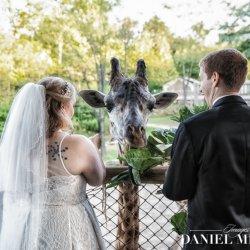 Giraffe Wedding Photo