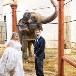 Cincinnati Zoo Wedding Photography