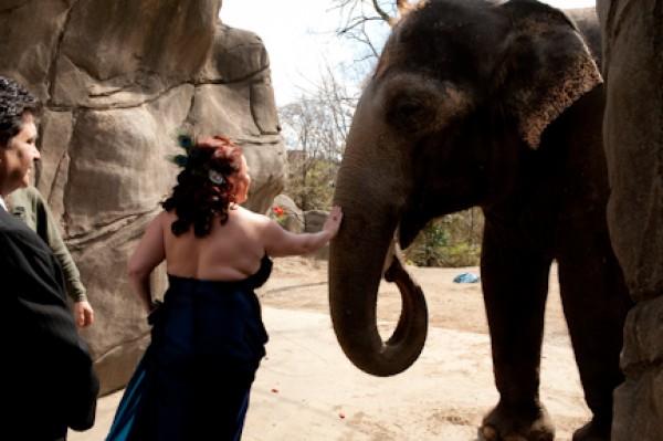 Cincinnati Zoo Wedding Venue
