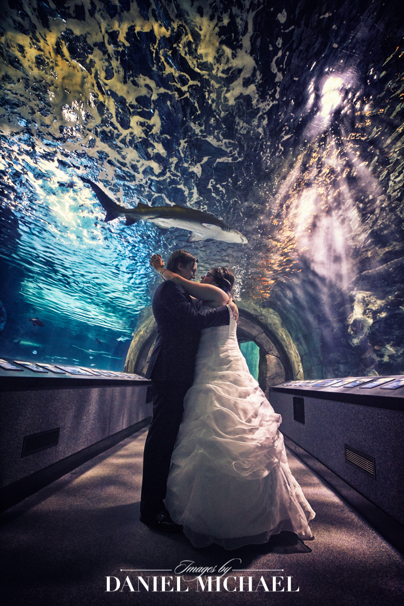 newport aquarium, wedding venue