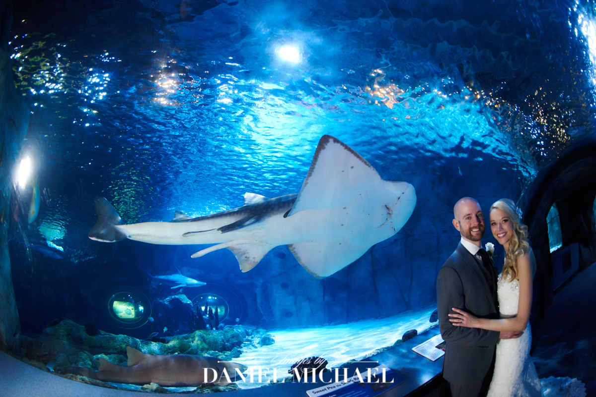 newport aquarium, wedding venue photography