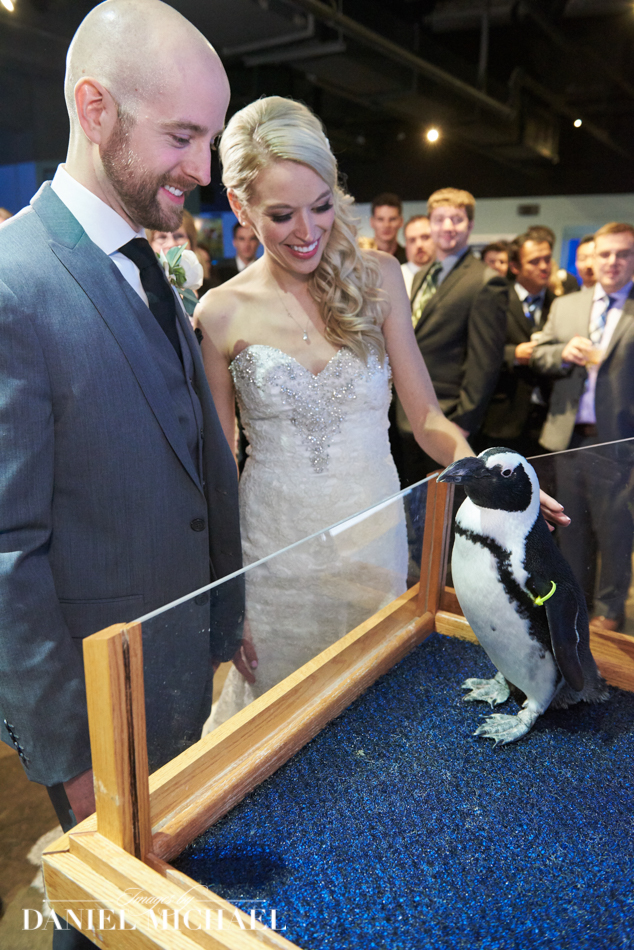 Penquins in Wedding Photography
