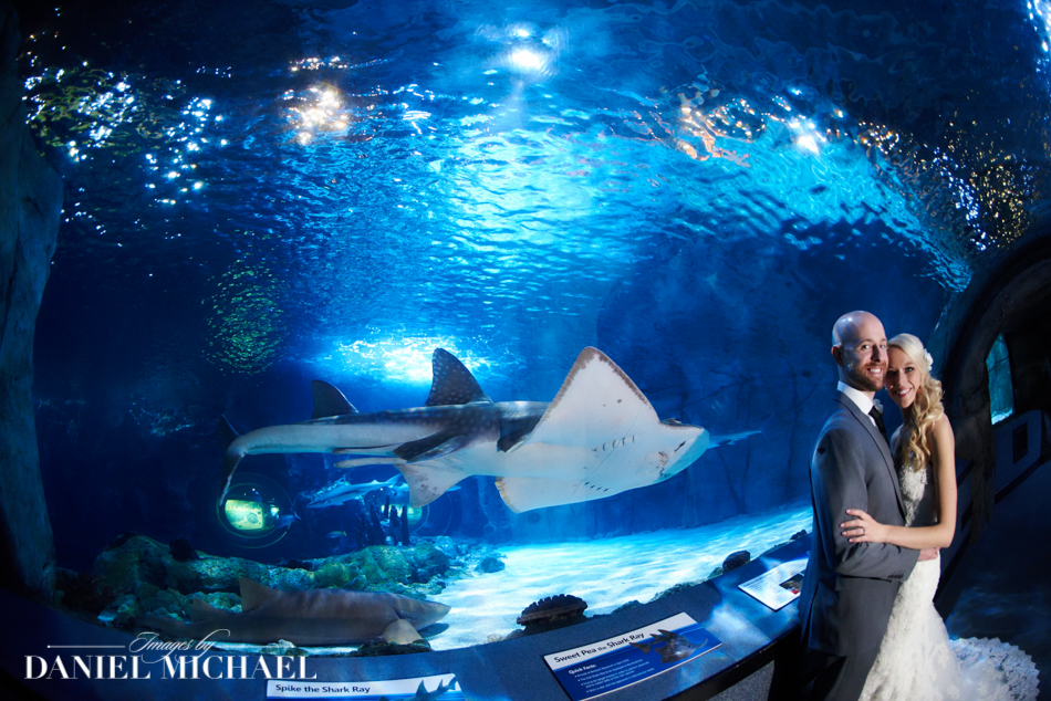 Newport Aquarium Wedding Photographers