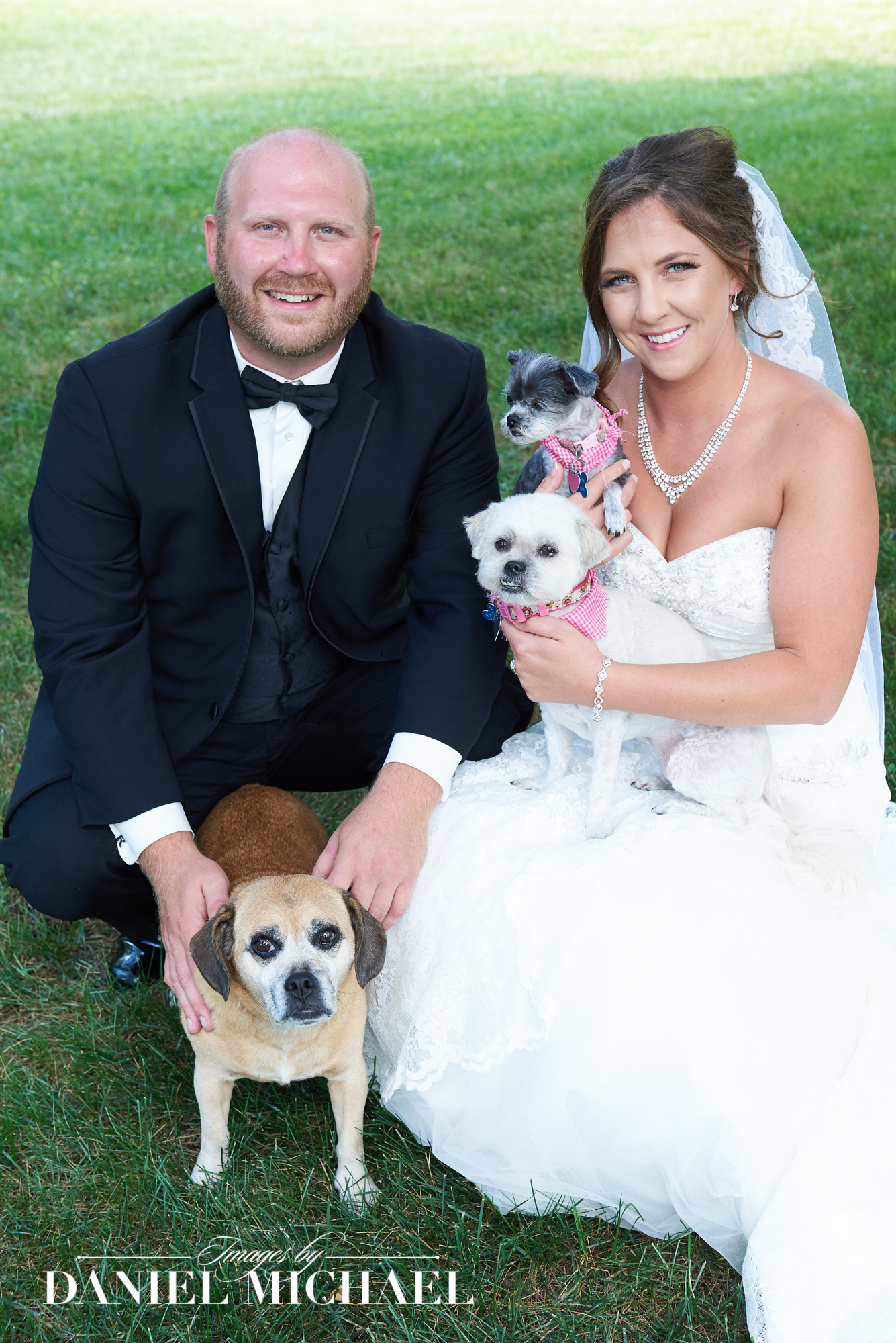 Dogs in Wedding Photography