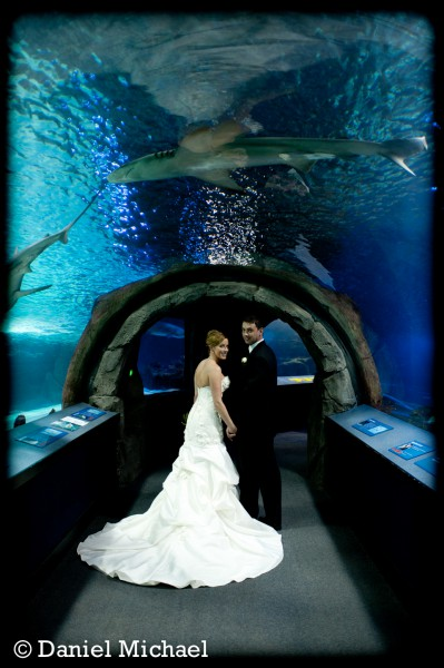 Newport Aquarium Wedding Reception Kentucky