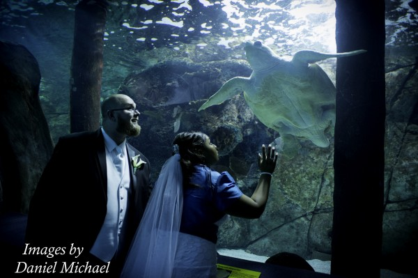 Wedding Photography Newport Aquarium